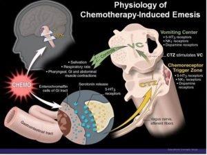 Chemoreceptor Trigger Zone