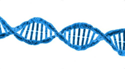 Two Gene Mutations and Pregnancy:MTHFR and MMADHC